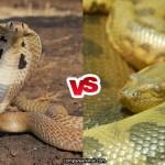 Compare King Cobra vs Green Anaconda