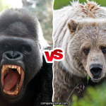 Compare Grizzly Bear vs Western Gorilla
