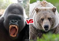 Western Gorilla vs Grizzly Bear