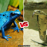 Poison Dart Frog vs Cobra Comparison