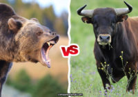 Bull vs. Bear Comparison