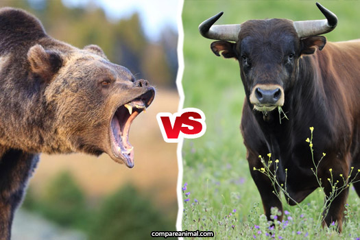 Bull vs. Bear Comparison