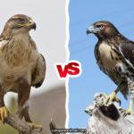 Compare Falcon vs. Hawk